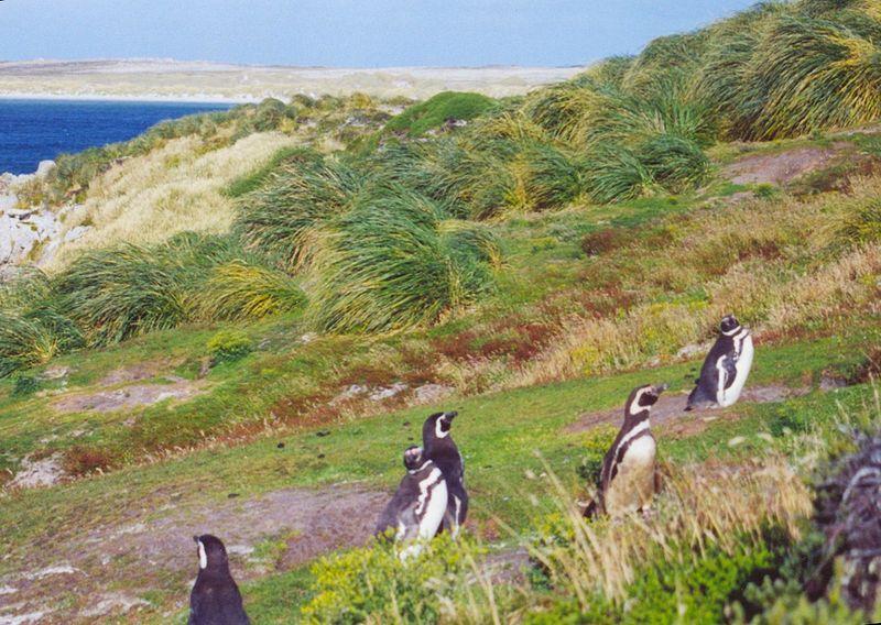 FalklandsGypsy-Cove