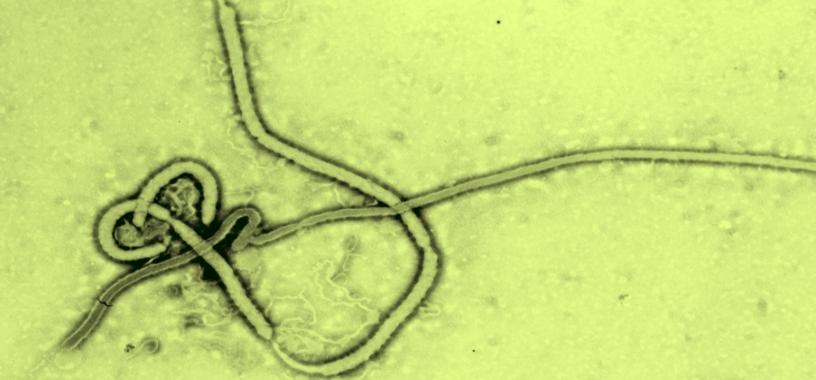 EbolavirusWikipediaColor