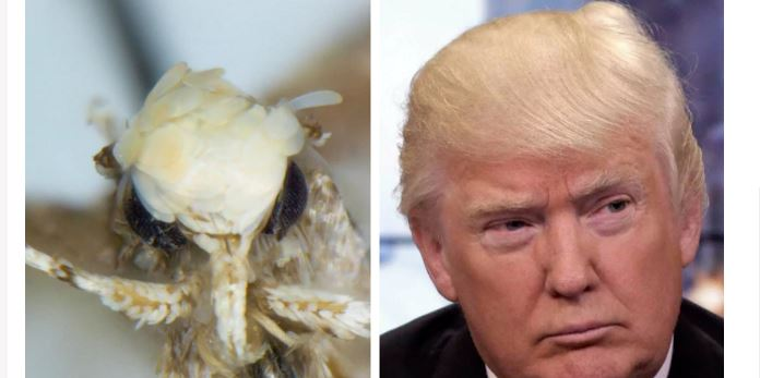Motte Trump